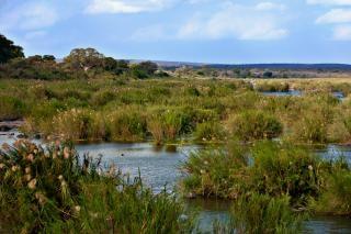 Kruger park paesaggio scenico