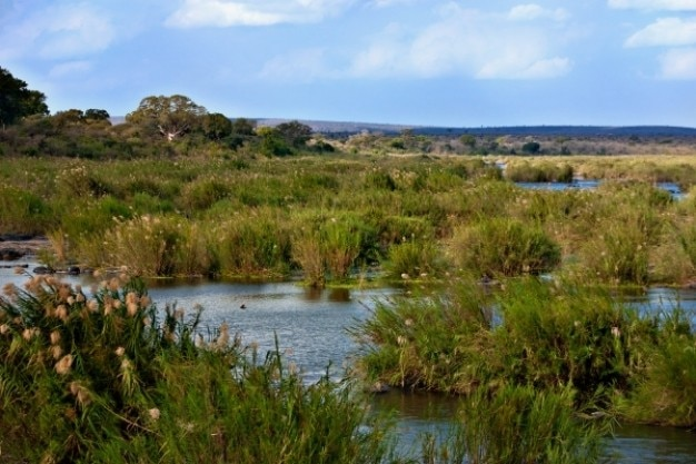 Kruger park landscape