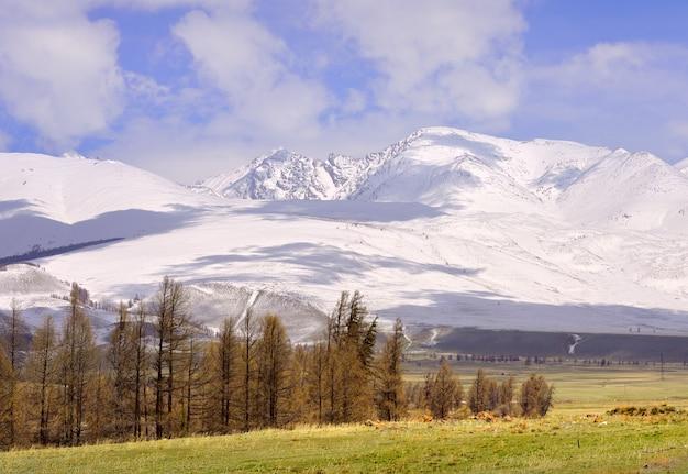 春の倉井草原雪をかぶった山頂の斜面の乾いた草