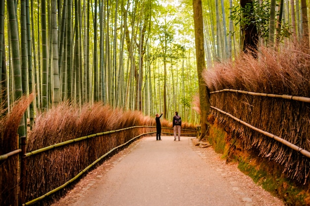 Kyoto, japan - november 12: the path to bamboo forest in kyoto, japan on november 2015. kyoto is one of the most famous tourist destination in japan.