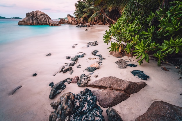 La digue island, seychelles. beautiful exotic tropical sandy beach with exotic plants in evening sunset light.