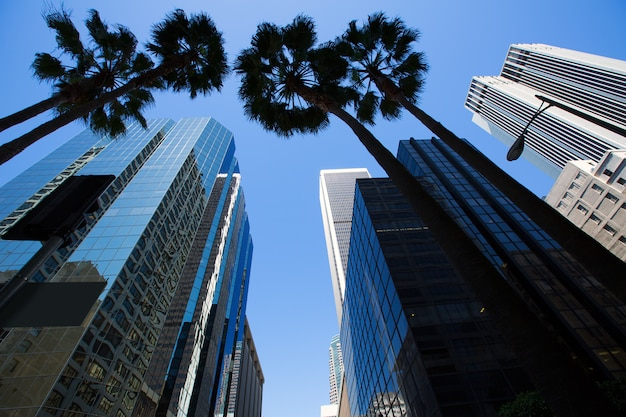La los angeles downtown with palm trees