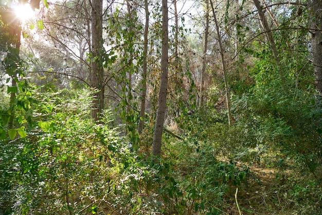 La vallesa сосновый лес в деревне la canada