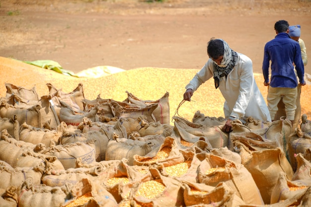 Laborers packing jute bags of corn