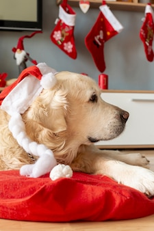 Labrador at home wearing santa hat