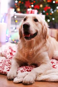 나무 바닥과 크리스마스 장식 표면에 격자 무늬에 누워 래브라도