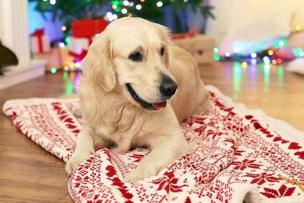 나무 바닥과 크리스마스 장식에 격자 무늬에 누워 래브라도