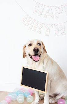Labrador retriever at a birthday party with an empty board hanging on its neck