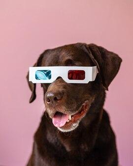 映画を見るためのピンクまたはグレーの背景ステレオメガネの3dメガネのラブラドールレトリバー犬
