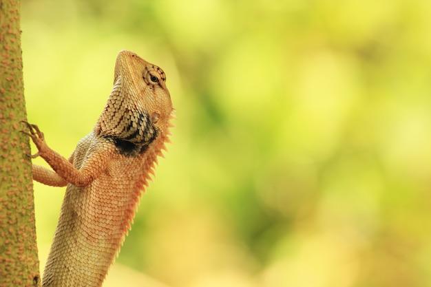 아름다운 자연 배경에 lacertilia.