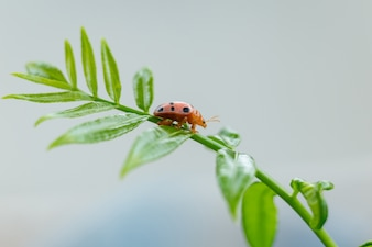 Lady bug on green leave