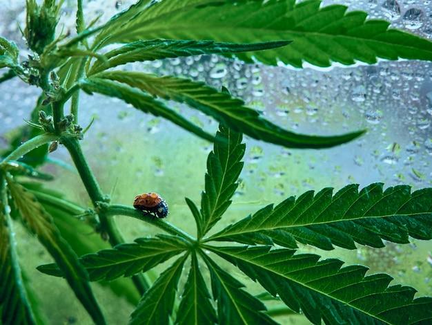 緑の葉の上に座っているてんとう虫。