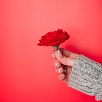 Lady's hand in knitted sweater with flower