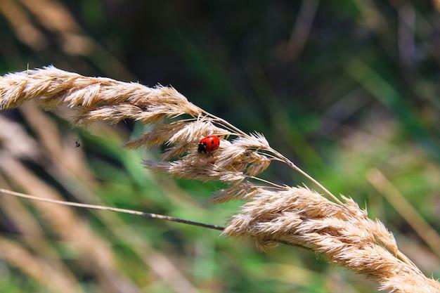てんとう虫と葉のクモ