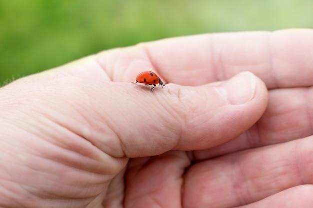 てんとう虫は男の手に登ります。自然、動物に気を配る