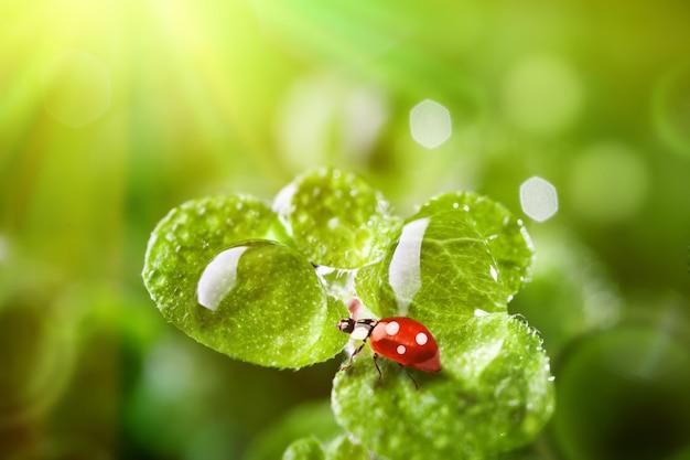 Ladybug a cow on the grass. macro. horizontal.