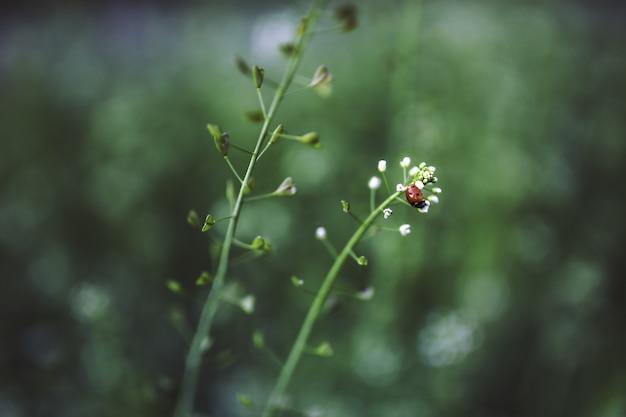 Ladybug on a flowering plant
