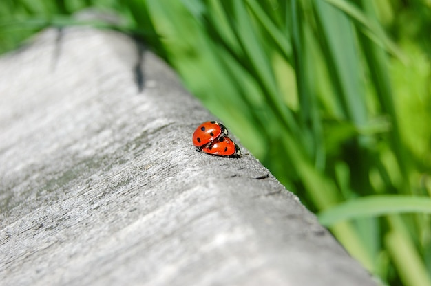 Ladybug on grass. beautiful nature.