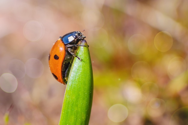 Ladybug on a green leaf. summer macro landscape in bright sunlight.