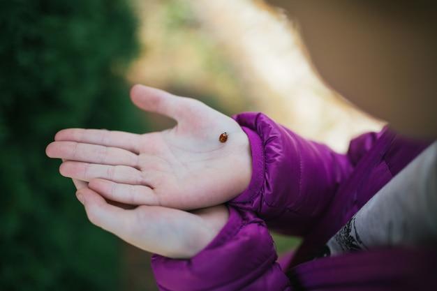 Ladybug on hand