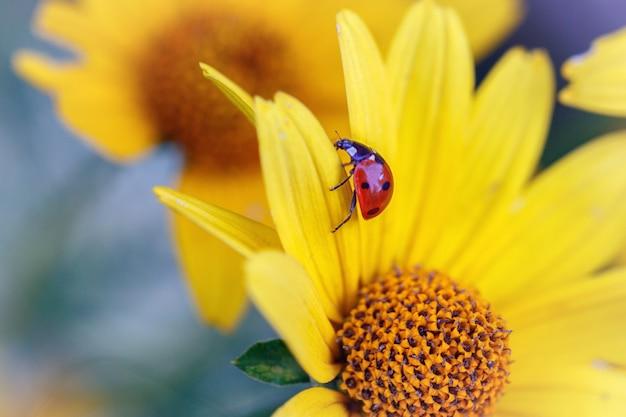 노란 꽃 꽃잎에 무당 벌레