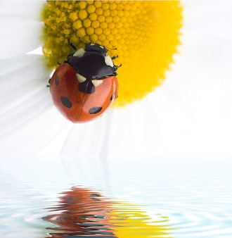 白の上の花のてんとう虫