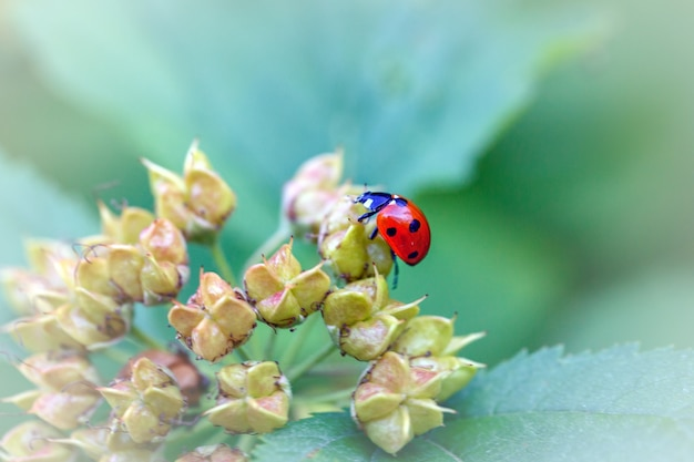 검은 점이있는 무당 벌레 빨간색 녹색 잎.