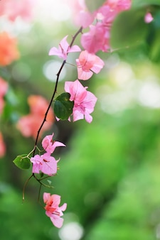 Lagerstroemia's flowers and plant stalks