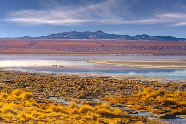 Взгляд красной laguna colorada в национальном парке eduardo avaroa, боливии.