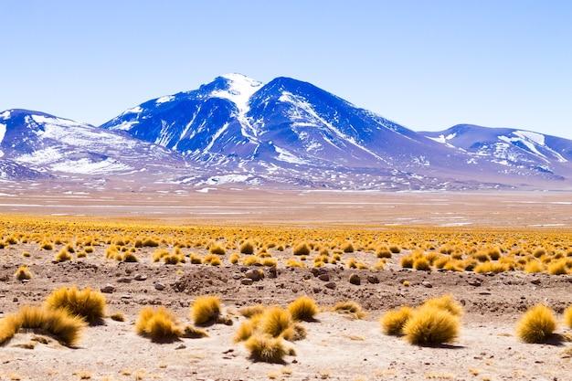 Пейзаж лагуна колорада, боливия. красивая боливийская панорама. красная вода лагуны