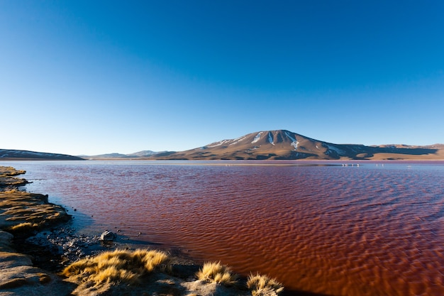 Laguna colorada landscape,bolivia. beautiful bolivian panorama. red water lagoon