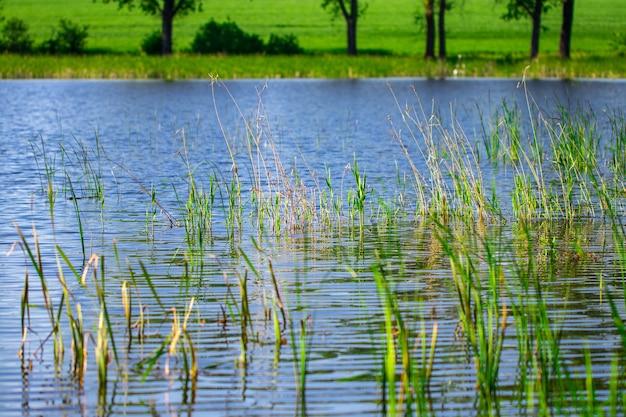 晴れた日の水の近くの湖と緑の牧草地。