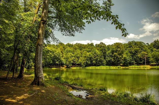 숲 배경에서 호수와 푸른 나무