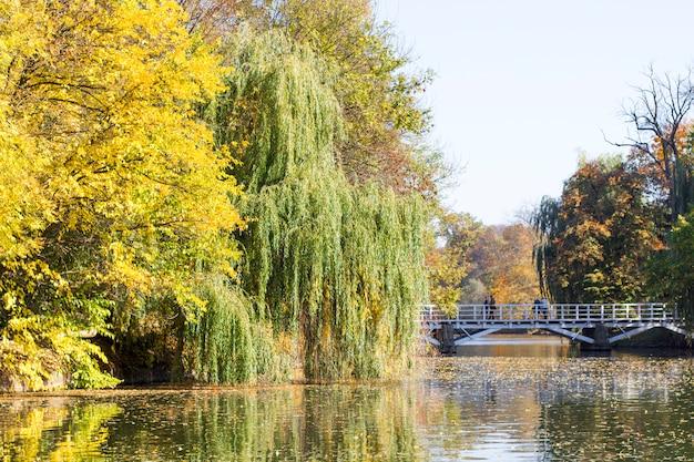 秋の公園の湖と木々
