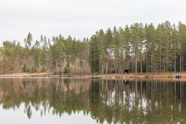 호수, 잔잔한 물, 물 속의 숲 반사, 구름