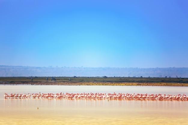 Lake and flamingos in kenya, africa.