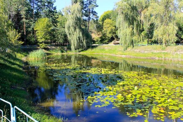 공원의 호수