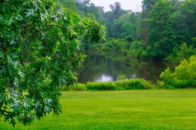Озеро в летнем лесу. солнечный день, голубое небо.