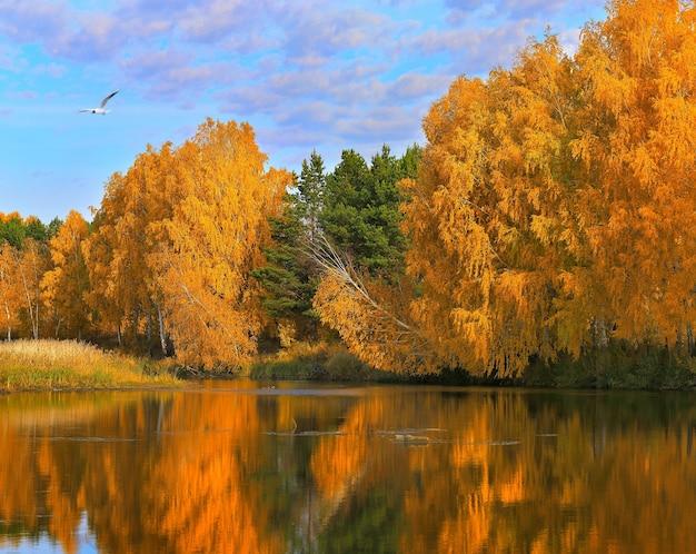가을 숲의 호수