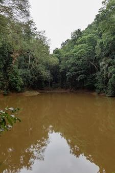 Озеро в джунглях. грязная глиняная вода.