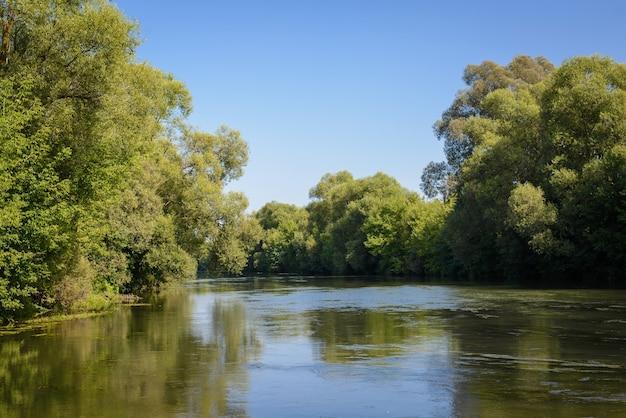 Озеро в зарослях леса летом в солнечную погоду