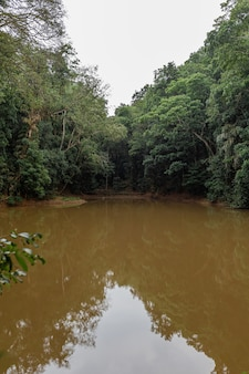 Lake in the jungle. dirty clay water.
