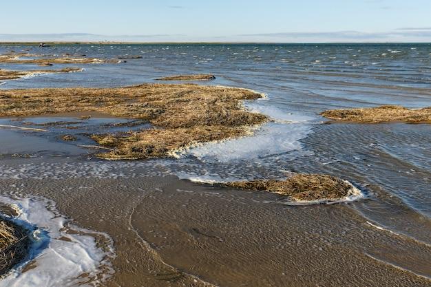 カミスリバス湖はカザフスタンの大きな塩水湖です。岸の海藻