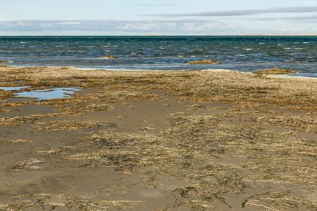 カザフスタンのkyzylorda地域にある大きな塩水湖であるkamyslybas湖またはkamyshlybash湖。海岸の藻類