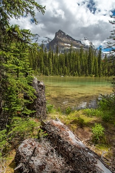 Lake ohara hiking trail in cloudy day in spring, yoho, canada