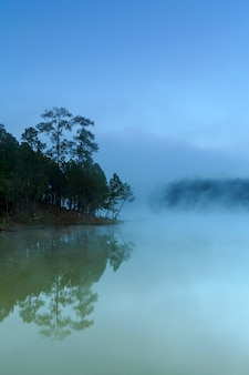 Lake and pine forest on morning time