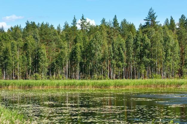 表面に睡蓮が描かれたruotsalainen湖の夏の景色(フィンランド、hevossaariの近く)。