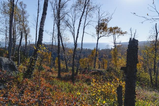 ミネソタ州の丘の上から見たスペリオル湖