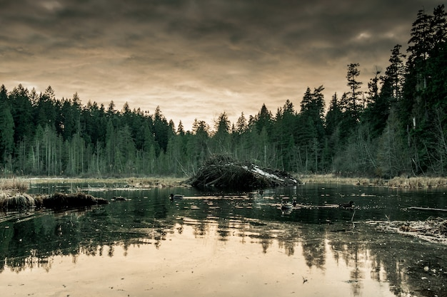 暗い灰色の空と森に囲まれた湖