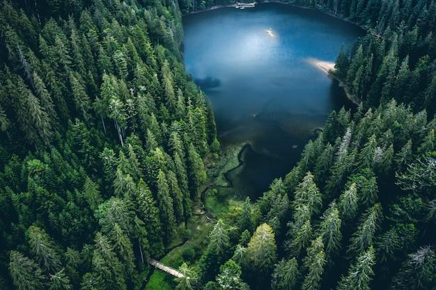 Озеро синевир в обрамлении соснового леса в карпатах вид сверху